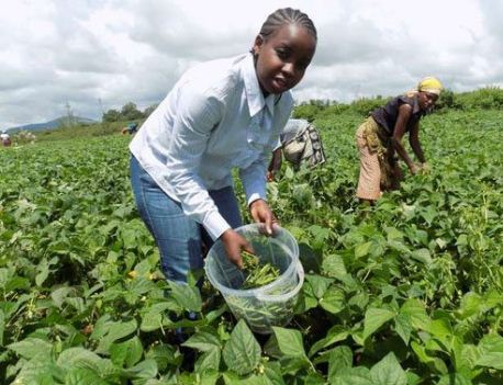 10 Most Profitable Agricultural Business In Nigeria